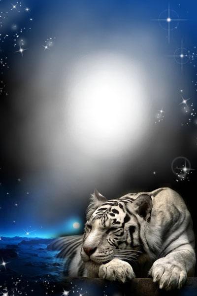Исходник рамки с тигром на фоне неба