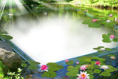 Рамка в виде пруда с лилиями