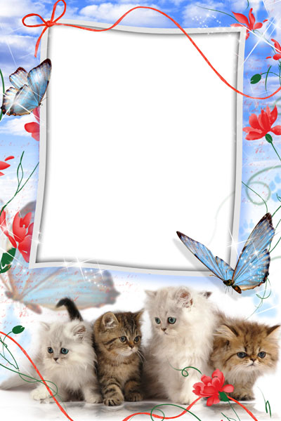 Рамка с котятами