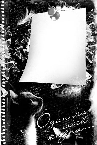 Рамка черно-белая с котом