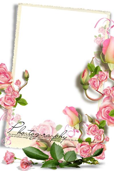 Рамка с розовыми розами