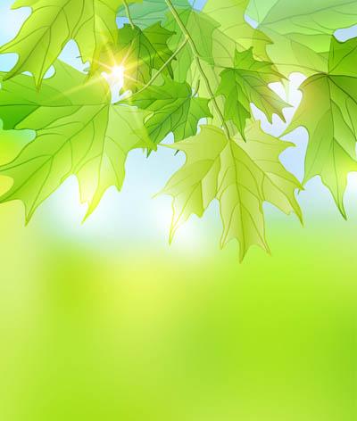 Фон с кленовыми листьями