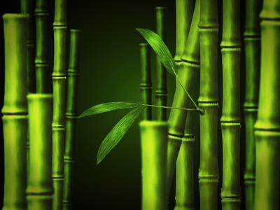 Природа → бамбуковый лес